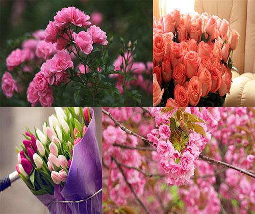 دانلود جدیدترین و بهترین والپر ها از زیباترین گل ها