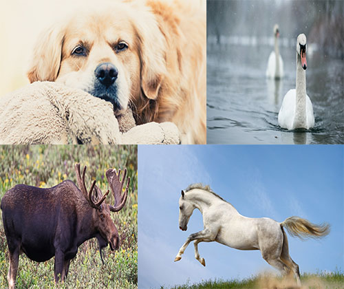 جدیدترین و بهترین عکس ها و والپر ها از حیوانات