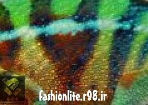 http://rozup.ir/up/fashionlite/Pictures/mode17/0811litemode3.tk.jpg
