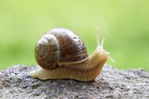http://rozup.ir/up/fashionlite/mode/modem/ML/Snail.jpg