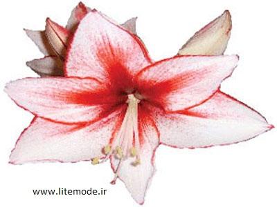 آموزش درست کردن گل لیلیوم