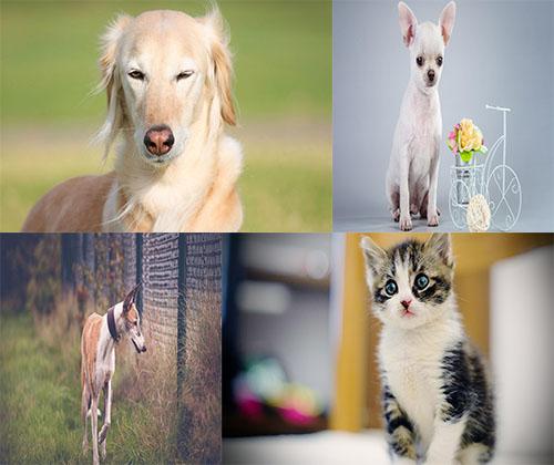 جدیدترین عکس ها از سگ ها و گربه های خانگی