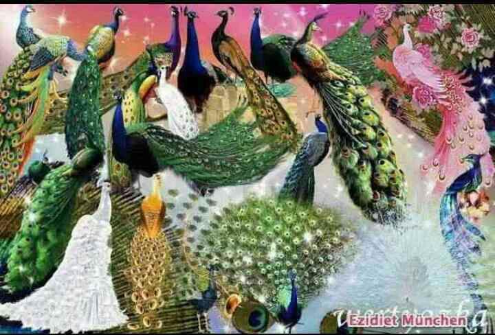 طاووسهای زیبا
