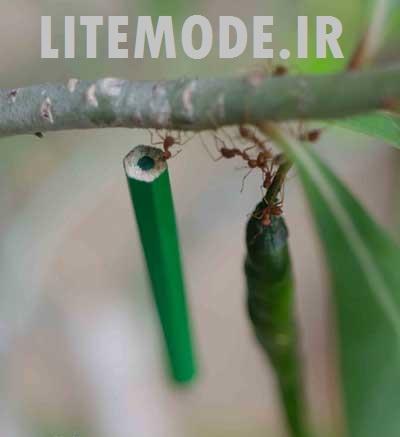http://rozup.ir/up/golimode/Pictures/modewO/www.litemode.ir7.jpg