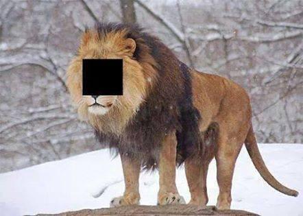 اگه گفتین این چه حیوونیه؟