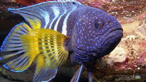 دانلود پاور پوینت شگفتی آفرینش ماهی