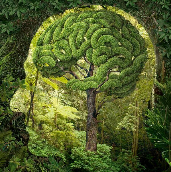 زیبایی شناسی -قسمت -۱- ادراکـــ هنری