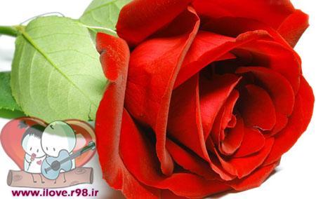 داستان کوتاه بسیار زیبای گل سرخ