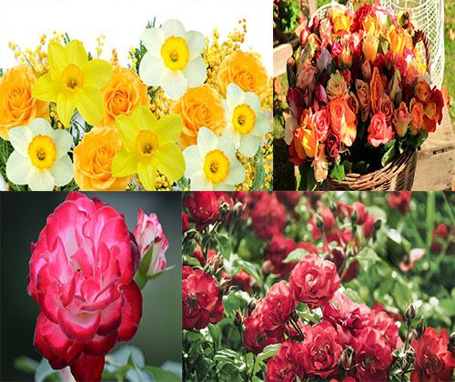 جدیدترین و بهترین عکس های فوق العاده زیبای گل