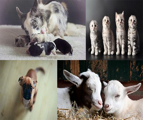 جدیدترین و بهترین عگس ها از حیوانات