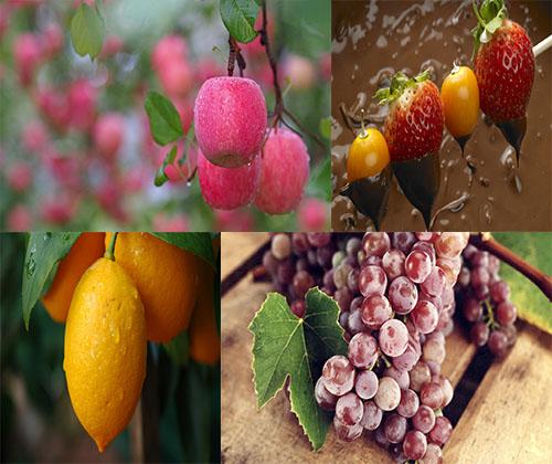 مجموعه عکس های جدید و فوق العاده زیبا از خوراکی ها و میوه ها