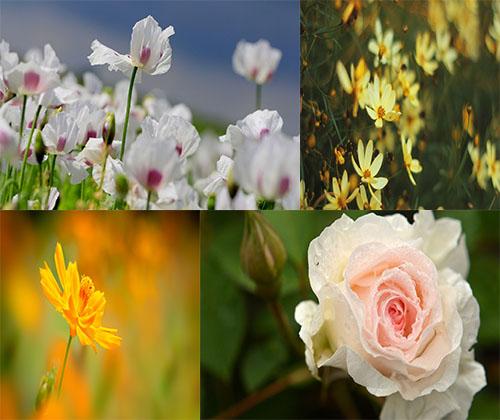 جدیدترین و بهترین عکس ها از زیباترین گل ها