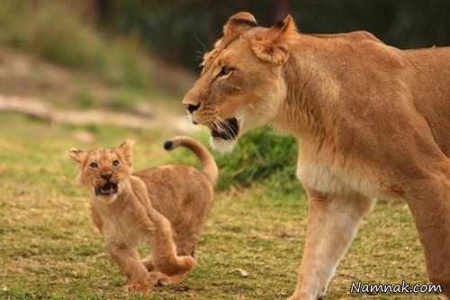 عکس از حیوانات جنگل