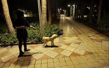 رژه سگهای پاکوتاه در شمالشهر/ بیتوجهی جامعه به عادیسازی عمل قبیح