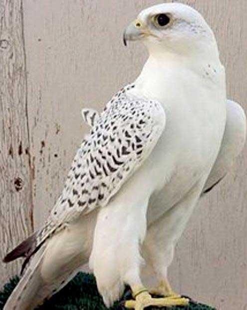 پرنده میلیاردی از قفس پرید + عکس