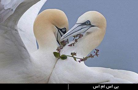 غمگین ترین دل نوشته های عاشقانه و زیبا