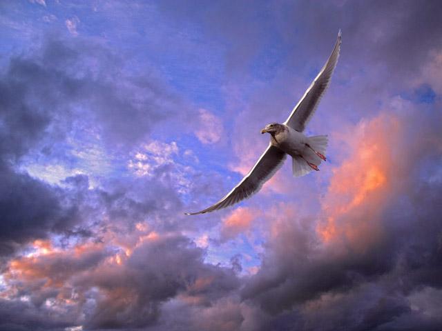 والپیر بسیار زیبای پرندگان