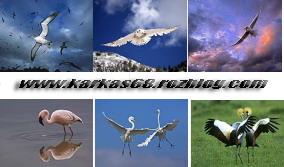 دانلود والپیر و عکس پرندگان