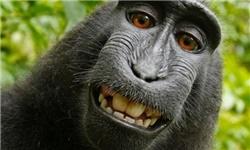 عکسی که این میمون بازیگوش از خودش گرفت، دنیای اینترنت را به هم ریخت