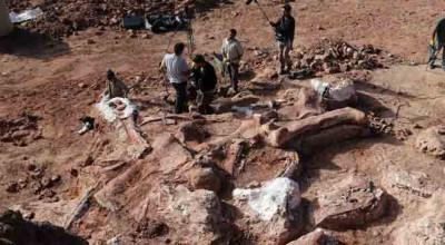 کشف بقایای بزرگترین دایناسور جهان/ وزن «دریدناتوس» برابر با یک گله فیل آفریقایی است / عکس