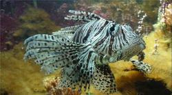 موجودات اسرارآمیز در اعماق اقیانوس/ تصاویر فوق العاده زیبا