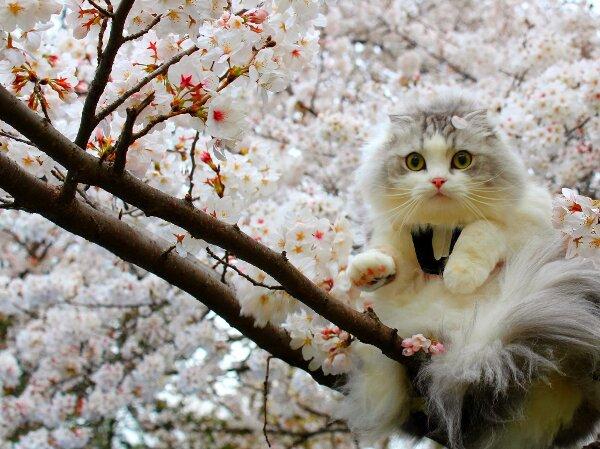 گربه زیبا