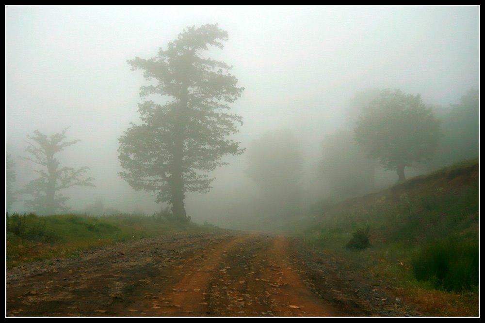 جنگل ابر1