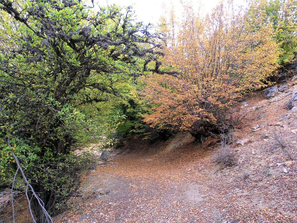 جنگل ابر5