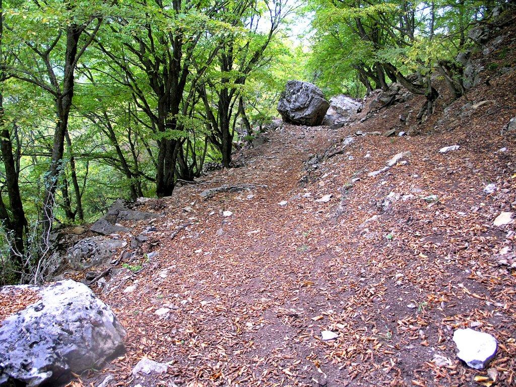 جنگل ابر6