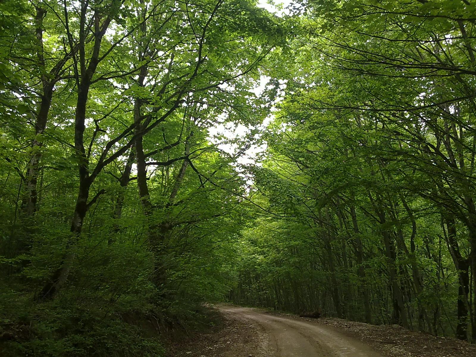 جنگل ابر12
