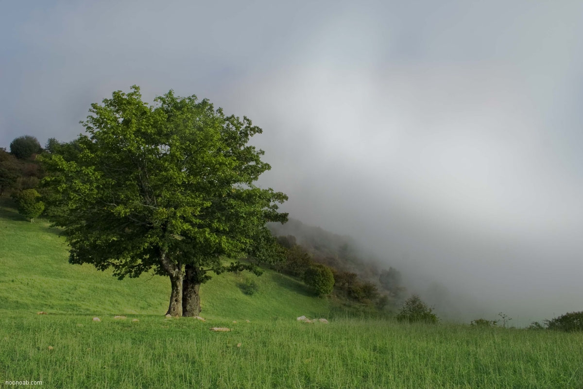 جنگل ابر13