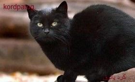 ارثیه 13/5 میلیون دلاری برای ثروتمندترین گربه جهان