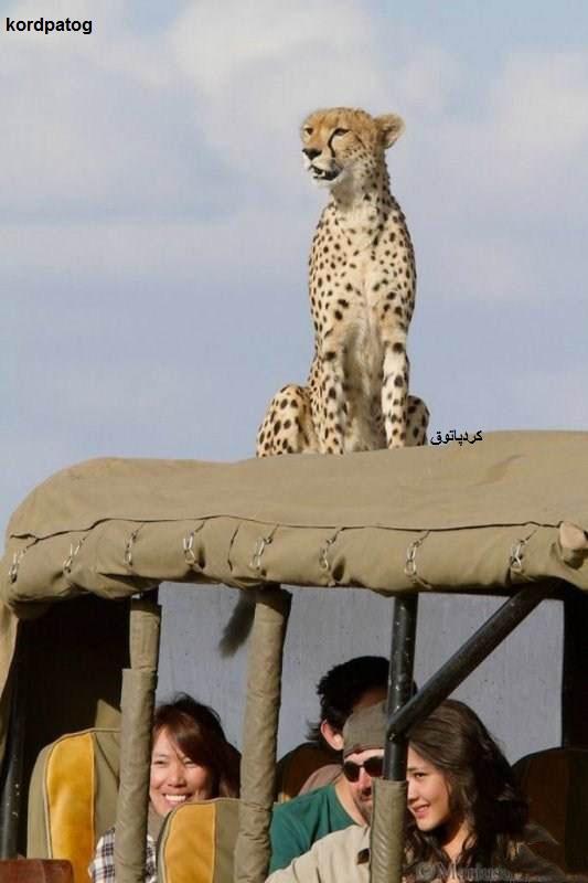 تصاویری جالب از حیات وحش افریقا