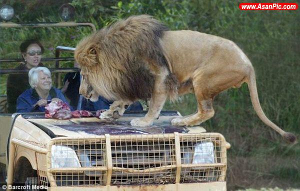 باغ وحش محدوده باز استرالیا+عکس