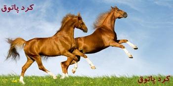 معماي معامله اسب ها