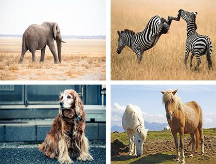 جدیدترین عکس ها از حیوانات با کیفیت HD