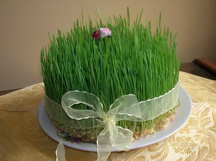 طرز تهیه انواع سبزه برای عید نوروز