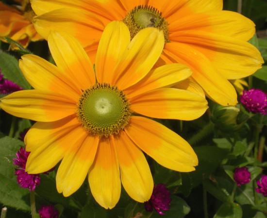 زیباترین گل های دنیا+تصاویر