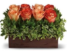 عکسهایی از چیدمان گلهای رز