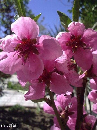 بهار در قلعه نو خرقان