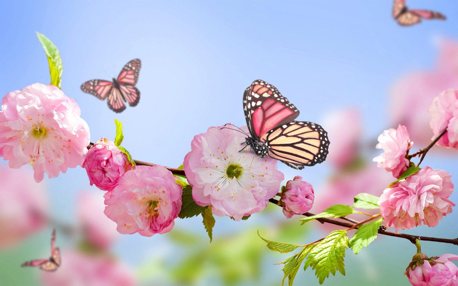 پروانه و بهار