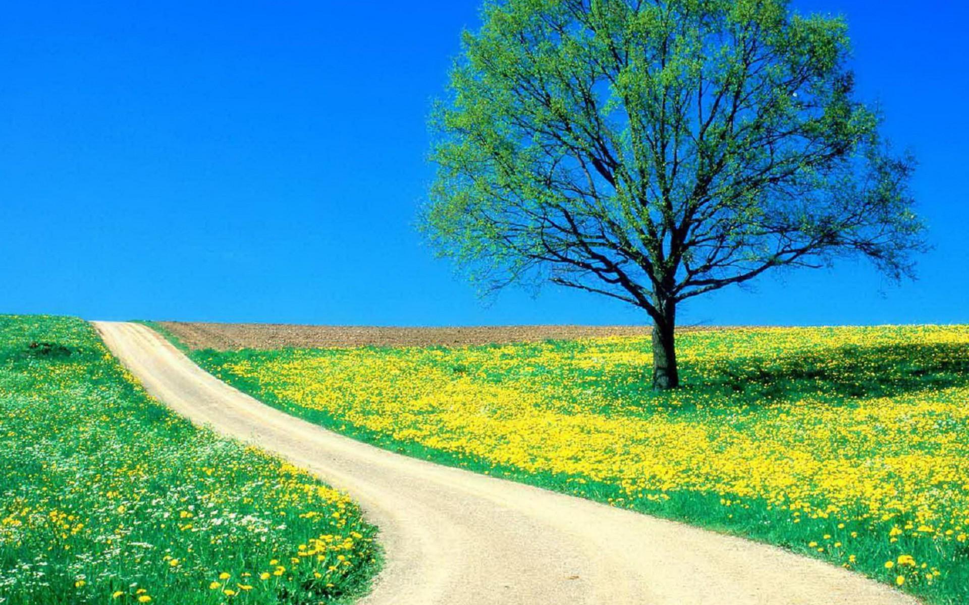 جاده بهار