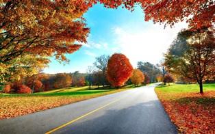 991-landscapes_nature_trees_autumn621157.jpg (314×196)