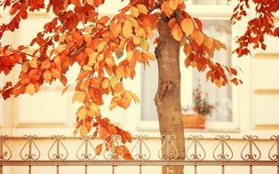 999-Autumn Tree.jpg (1920×1200)