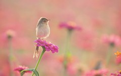 birds - low.jpg (240×150)