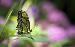 butterfly - low.jpg (240×150)