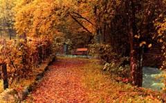 low-seasons_autumn_foliage_nature.jpg (240×150)