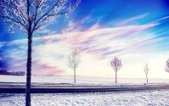 snow_winter_trees-low.jpg (240×150)