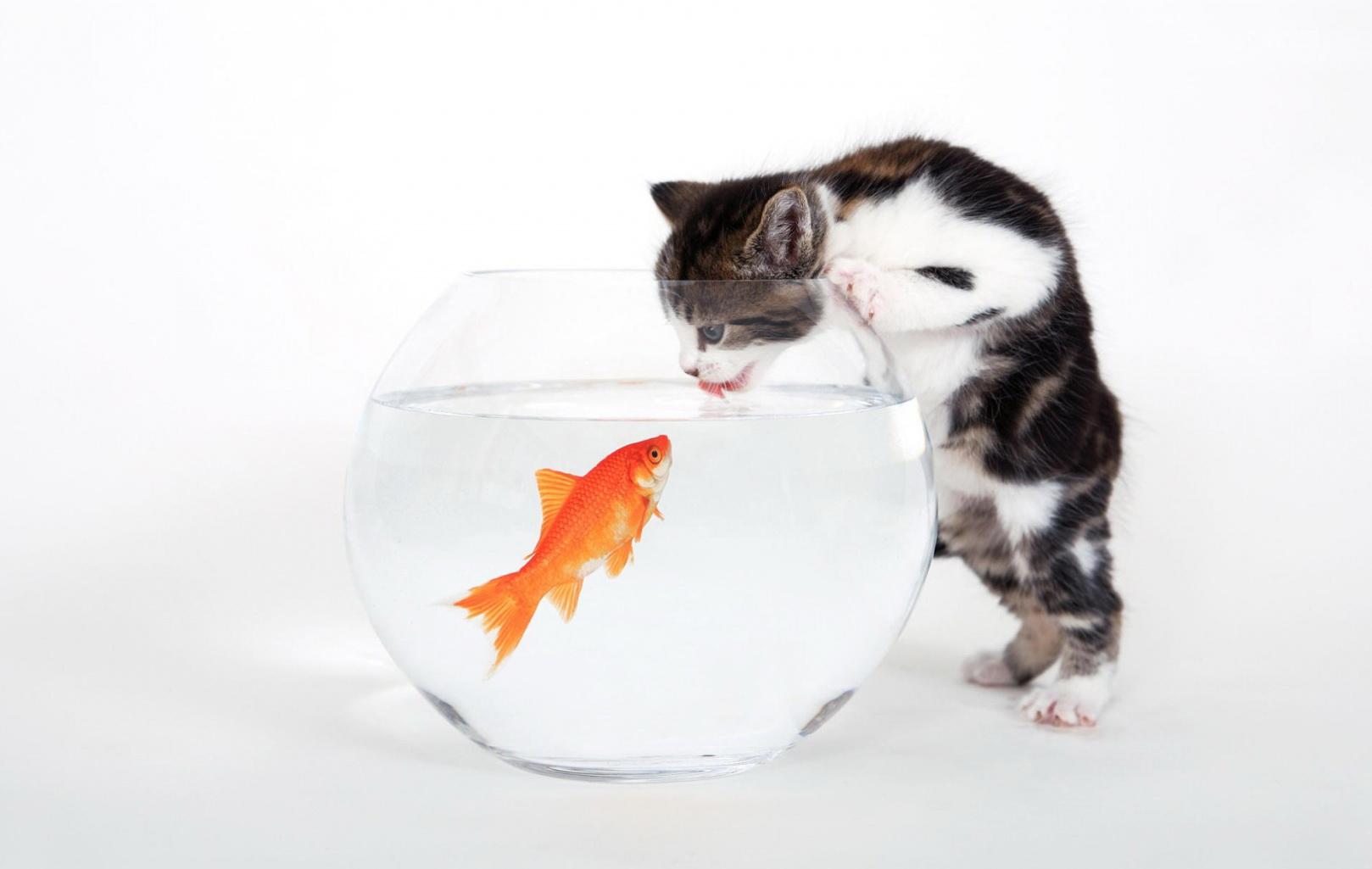 تصاویر باکیفیت از گربه های زیبا  /  MahPic.ir