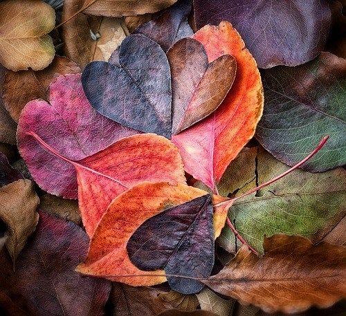 تا پاییز ...